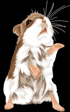 Hamsterzeichnung