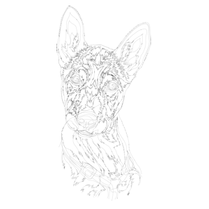 Unsere Hunde-Zeichnung