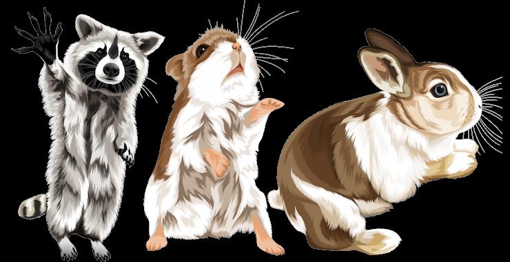 Alle Haustiere werden gezeichnet
