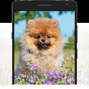 Foto deines Haustiers bei Pet Print hochladen