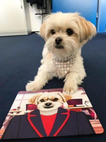 Mousepad mit einem Hund bedruckt