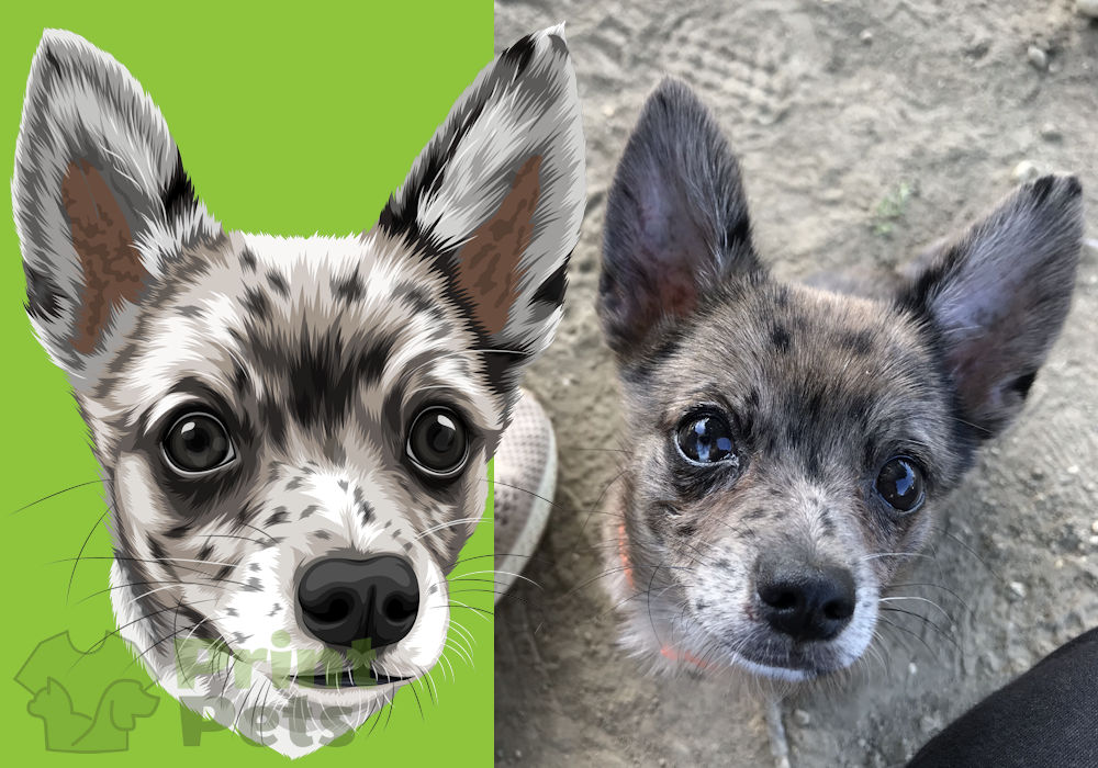 Chiwawa (Chihuahua)