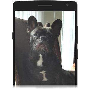 Foto von deinem Hund