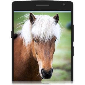 Foto von deinem Pferd