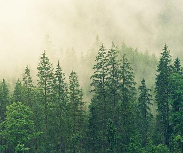Die Holzkeilrahmen unserer Leinwände tragen das streng kontrollierte FSC®-Siegel. Der Siegel steht für eine nachhaltige Waldwirtschaft die den Wald nicht übernutzt oder gar Kahlschlägt. Außerdem wird auf Pestizide und Gentechnik verzichtet. Der FSC®-Siegel steht auch für die Mehrung natürlicher Mischwälder, für den Schutz seltener Arten und Ökosysteme sowie für faire Entlohnung.