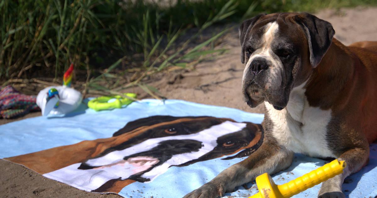 Badetuch mit deinem Hund, Katze oder Pferd