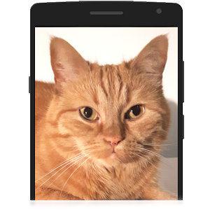 Foto von deiner Katze