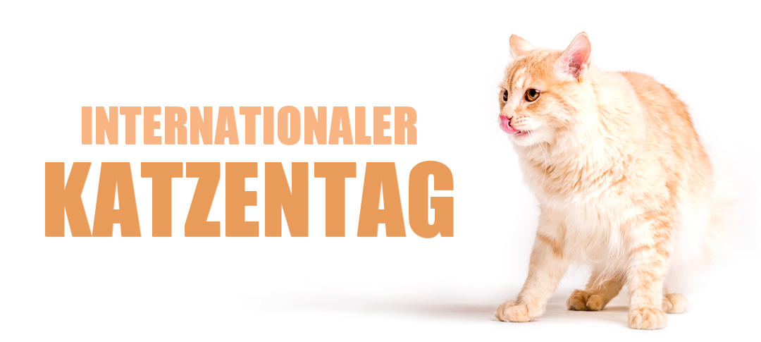 Internationaler Katzentag