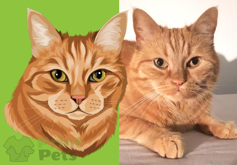 Europäisch Kurzhaar Katzen