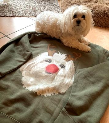 Emilio scheint zufrieden und glücklich zu sein mit Frauchens neuem Pulli 😊